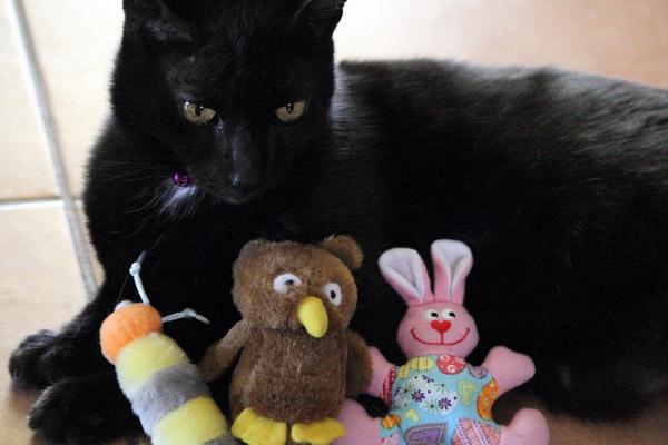 @kittehboi @PankythePanfur @BarnabasKitten @KushPanfur @NancyCakeFace @PantherQueen This me with some of the dollies http://t.co/DWB9TUlY9G