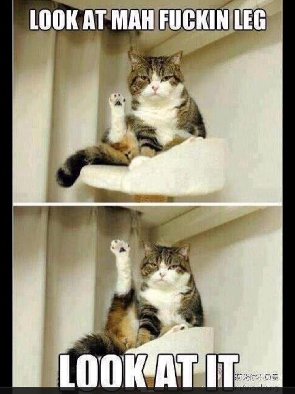 Me after I've taken the time to shave my legs .... http://t.co/8DDy6j6KK4
