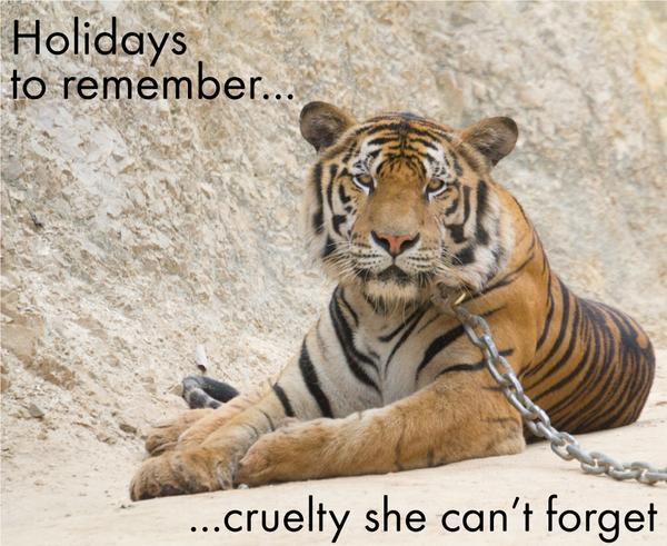 TAKE THE PLEDGE TODAY and learn how to be animal friendly on y our holiday: http://t.co/9F2EdXeBzS http://t.co/u7GX4c3LOz
