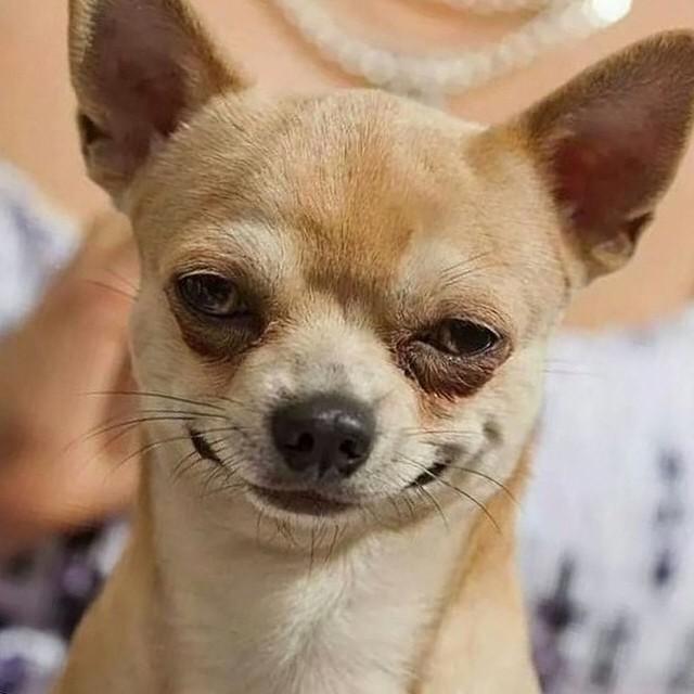 You Go Girl Animal Meme Smirk Dog (@SmirkDog) ...