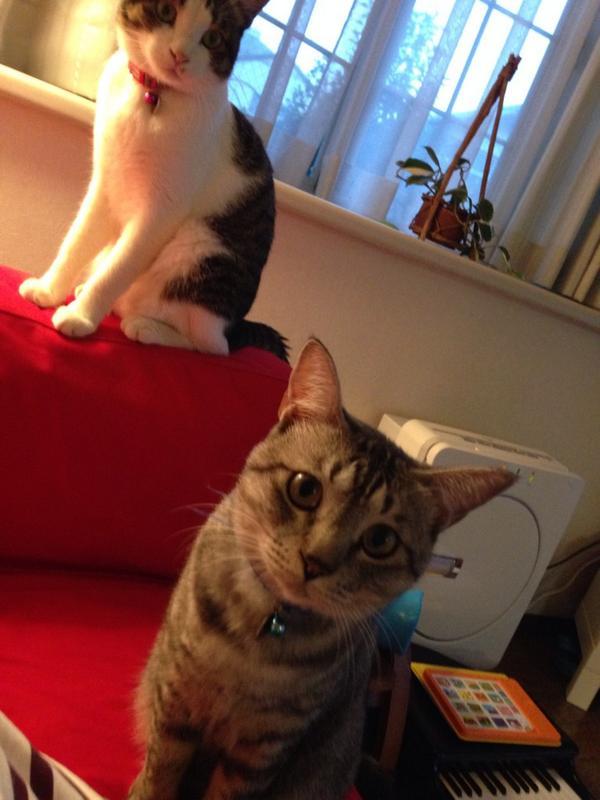 相変わらず美猫です。@2525toiki http://t.co/yQdiXW2ZMr