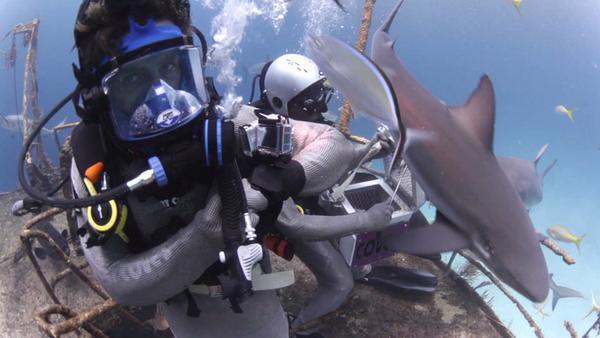 Die vielleicht fieseste Aufgabe von @officiallyjoko für @damitdasklaas: Lass' dich vom #Hai beißen #JokoGegenKlaas http://t.co/JfnPZJpypv