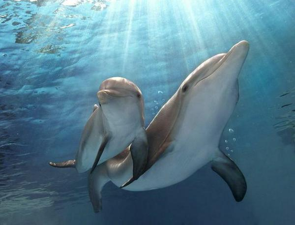 No matter our obstacles in life, we are all given plans for a #hope and a future. #DolphinTale2 #WinterHasHope http://t.co/VuaXVpKbLg