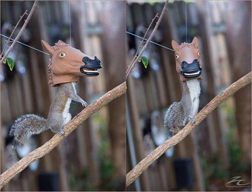 (펌) 다람쥐 먹이를 그 안에 넣어 놓은 결과.. http://t.co/cvHAGItR8l