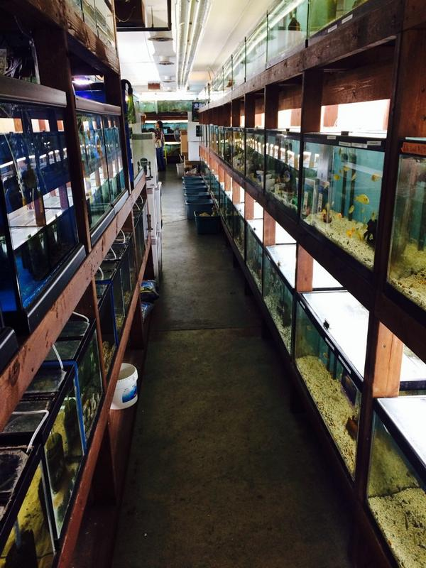 forest lake pet store