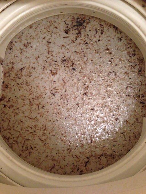 【閲覧注意】酸素系漂白剤で13年物の洗濯槽を洗ったらワカメが ...