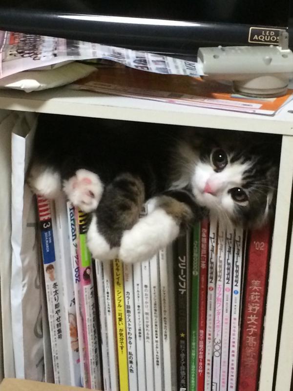 あの狭いところ好きな猫が可愛すぎる件 - NAVER まとめ matome.naver.jp/odai/214098230… pic.twitter.com/Uqv1lBgr0g