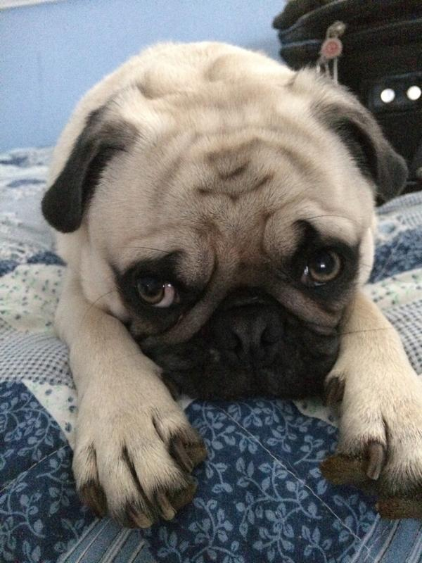 Rug On Twitter Nationaldogday Bosley