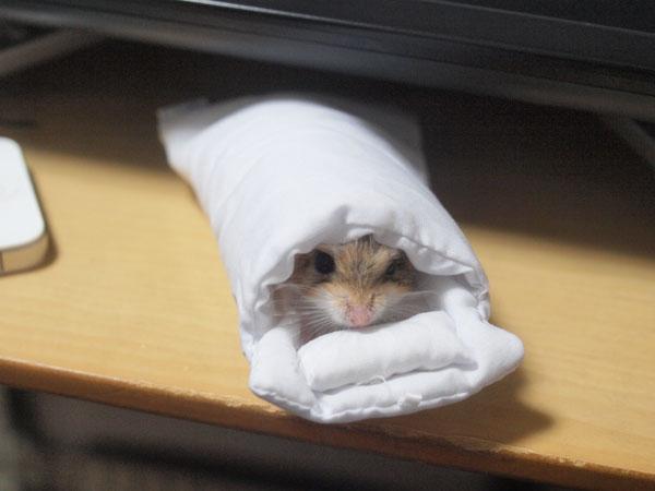 うちのオブトアレチネズミもお布団インしたよ! #スマホのおふとん http://t.co/XXrYxttJyF