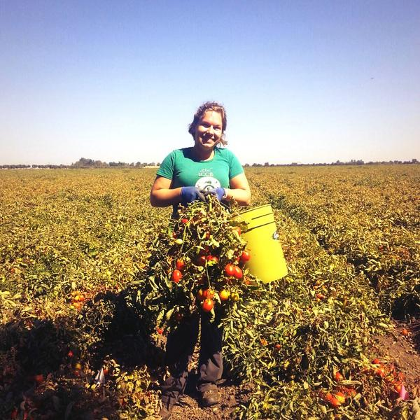 Some of our tomato plants weigh over 20lbs! #wildAg #fieldwork #weightlifting #badhair http://t.co/hboqxuApfi