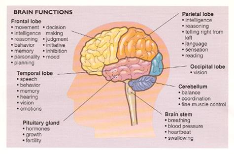Lou War on Twitter: Why is it so hard to diagnose brain tumors? The tumor location yields different side effects #BrainTumorThursday http://t.co/w0ACh1qvS4