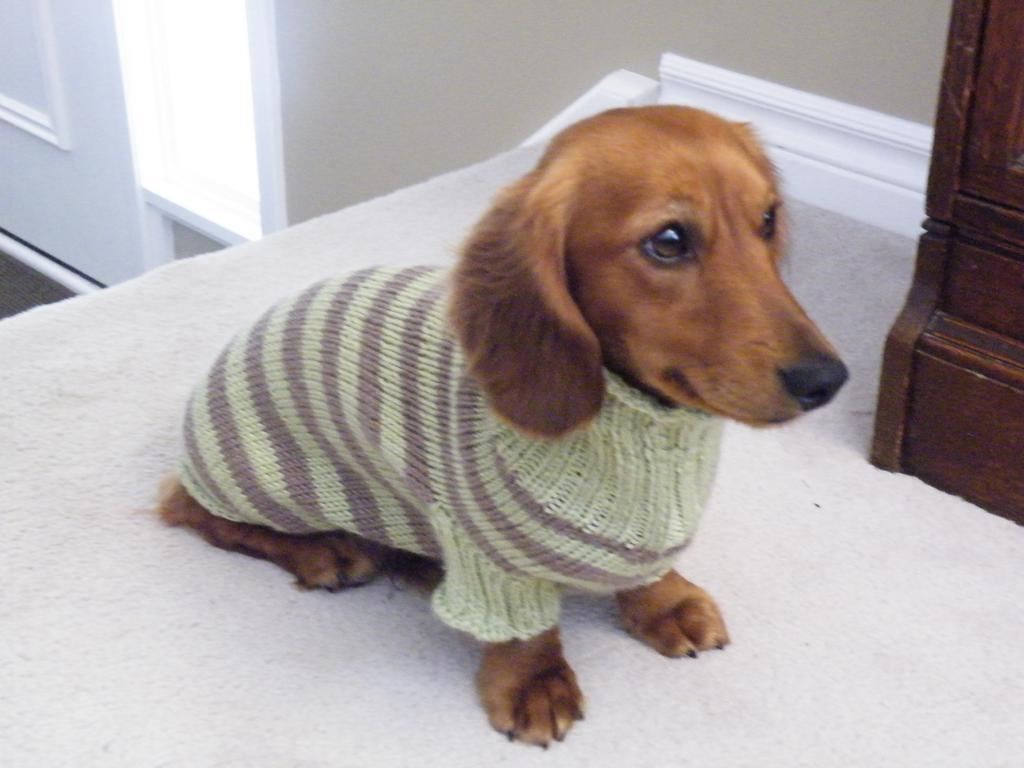 Knitting Patterns For Dachshund Dog Sweaters : John Brennan on Twitter: