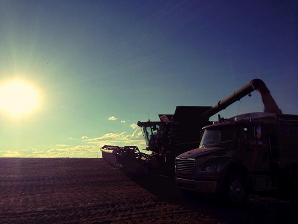 Beechysask >> Tiffany Lizee On Twitter Harvest Has Begun Photo By Natalie Braun