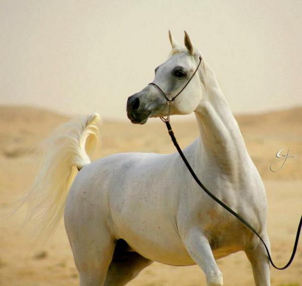 الخيول - Magazine cover