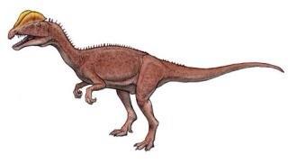 恐竜男 (@dinosaurman51) | Twit...