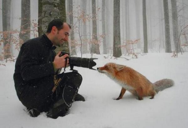 THIS!!! //RT @ABRACCO: This is how a real man shoots a Fox! http://t.co/lXFf1TpW8c