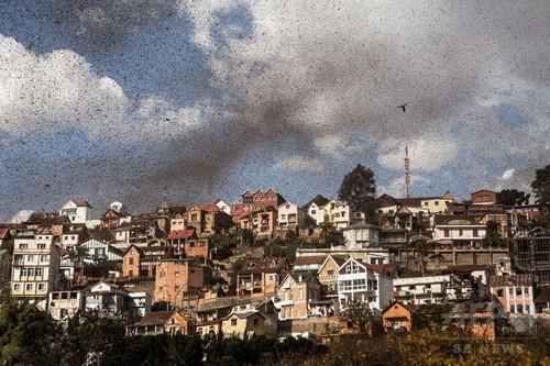 マダガスカル首都を覆う黒雲、イナゴの大群襲来 写真6枚 国際ニュース:AFPBB News http://t.co/bLGqi23skz @afpbbcom 【なんか黙示録にあった様な気がする、旧約にもあったよね】 http://t.co/p9ft0vblsf