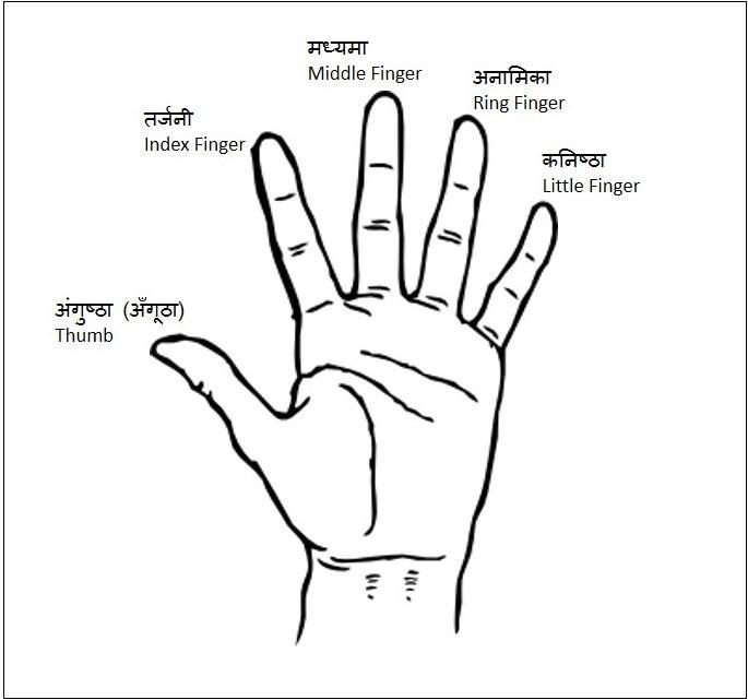 Vedic School On Twitter Quot Thumb Amp Fingers Of Hand Thumb