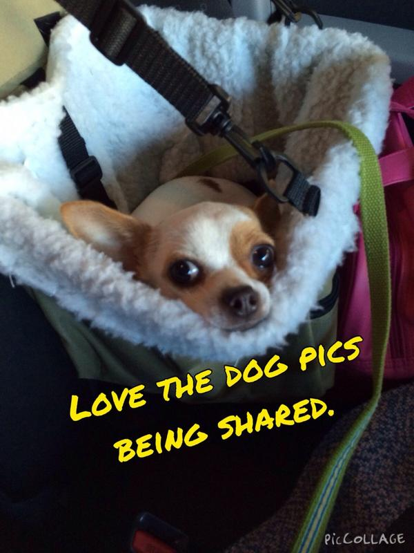 Love #bemoredog #aussieED Awesome chat @Hobson_k http://t.co/QpnyBlVeCa