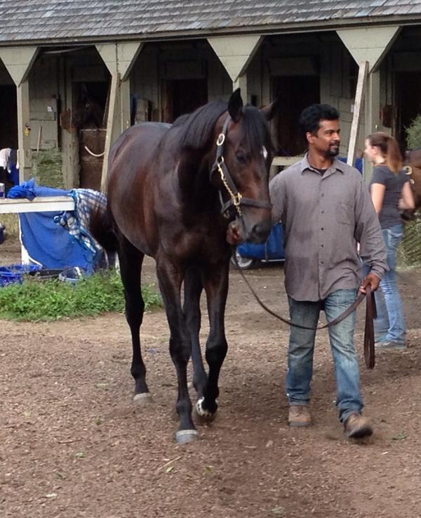 Zenyatta's first foal, Cozmic One, walking after his bath @ Saratoga. http://t.co/BDPIm1M78n