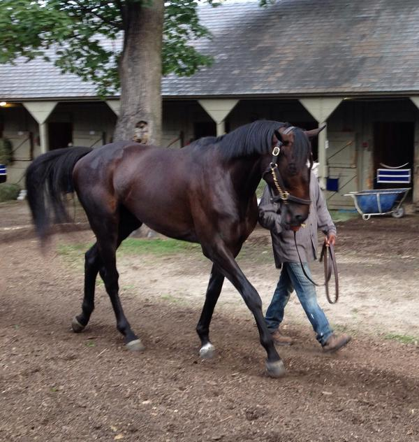 Zenyatta's son, Cozmic One, lookin' good after his morning bath in Saratoga. http://t.co/kaYM67aNwW