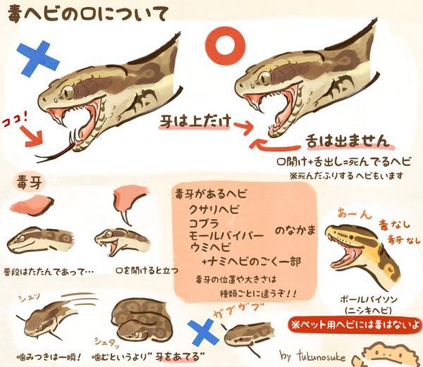 毒ヘビの口について+α pic.twitter.com/pBW4kH196o