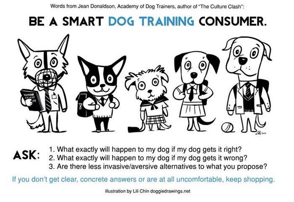 Image result for lili chin be a smart dog training consumer