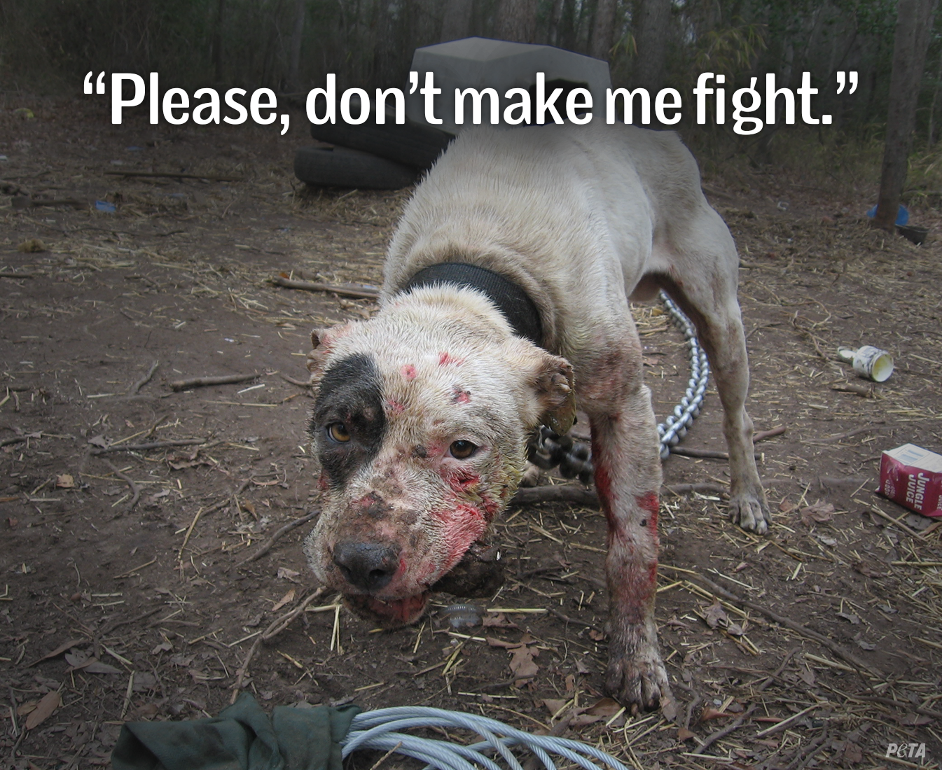 peta fighting for animal rights Instead it promotes a cruelty-free lifestyle and the ascription of rights to non  have been tied to animal fighting in  dogs used in dog fighting.