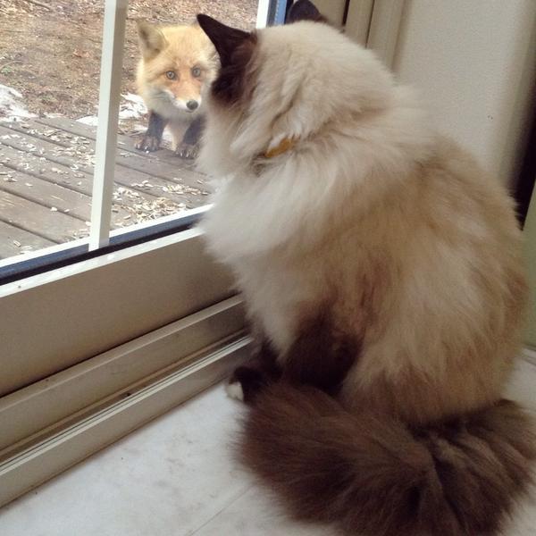 思いっきり近くで会うとそれほどテンションが上がらない猫、ルル。(*ΦωΦ)…。。(*Φ×Φ)……。。 pic.twitter.com/OEPXxFCsF3