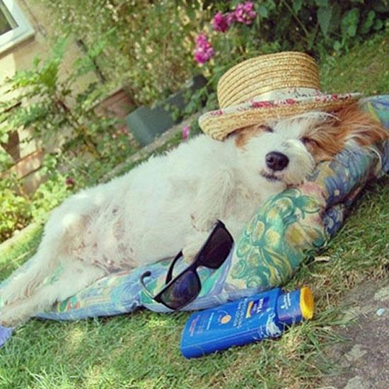 The 20 chicest pets on Instagram: http://t.co/q5ypbvazWM http://t.co/TwpKI43BgW