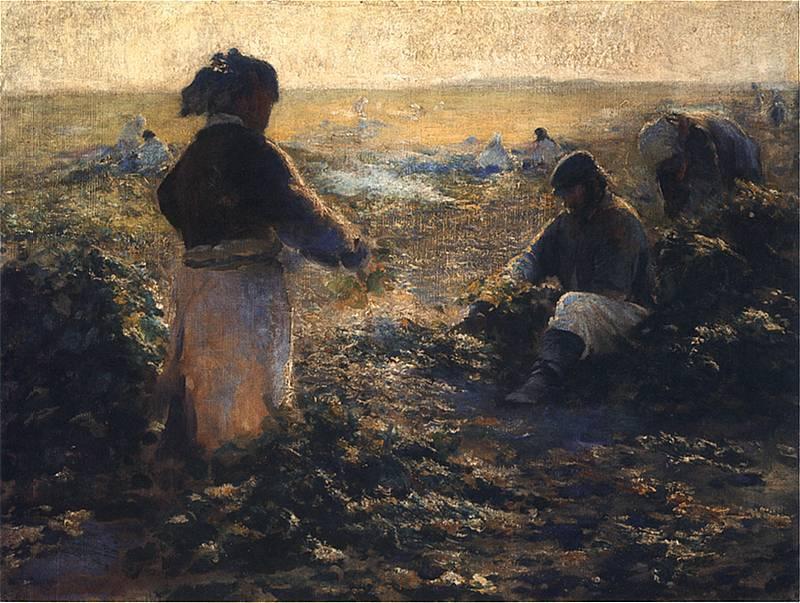 Digging beets