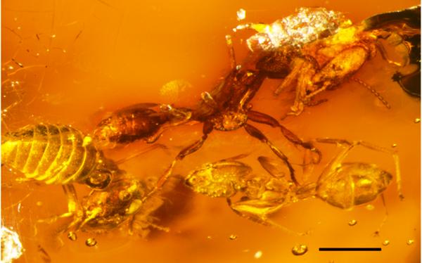 Un combat entre #termites et #fourmis vieux de 15 millions d'années figé dans l'ambre ! http://t.co/YX9wRSFhjw http://t.co/TuifcZzWzu