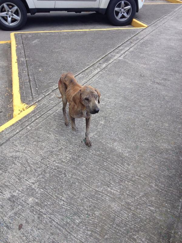 En el estacionamiento del Parque Los Pinos del Junquito se encuentra un perrito muy enfermo! @MASCOTASDECALLE http://t.co/ZnvTmbvV3e