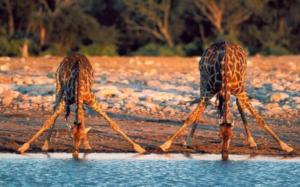 560 Gambar Hewan Minum Air Terbaik