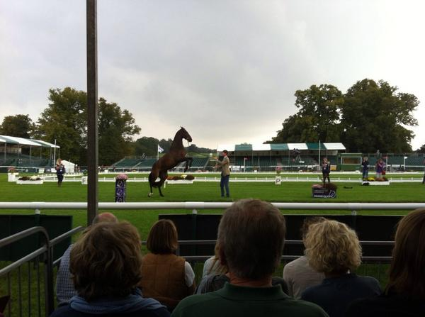 An exciting moment for William Fox-Pitt and Bay My Hero during the first horse inspection!! #LRBHT http://t.co/nrINVlWrxV
