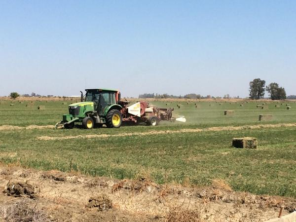 Tractor baling #alfalfa  Eats up lines of dried alfalfa and poops out bales. http://t.co/YUgdtt3Sht