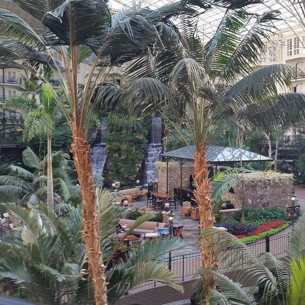 Slept well to sounds of the waterfall outside my room at #Opryland hotel. #EIJ14 #Nashville http://t.co/eKGbYnNcQT http://t.co/0ujOgRZzAu