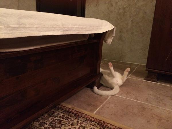 なぜそこでそうやって寝ることになったのかと思う。 pic.twitter.com/rjDKSGIKnB