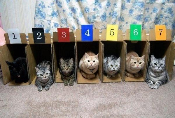 Cat racing is not the most exciting of sports. http://t.co/zglMEMRgUI