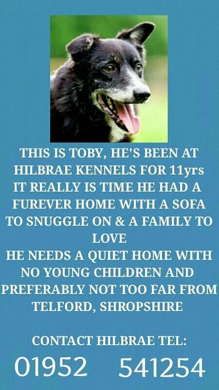 Is there a kind heart &sofa waiting for @HilbraeToby? He's been in rescue for 11yrs! Spread the word with a RT pls http://t.co/daxTkkyZTF