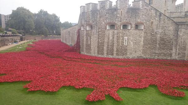 Finally got to see the #TowerPoppies today, what an amazing sight! http://t.co/AR2NfUouqn