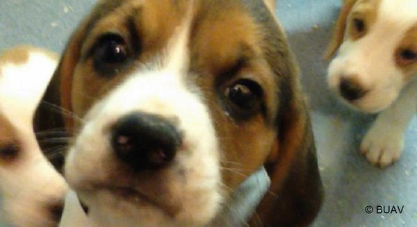 Did you know puppies are #BornToDie in UK experiments? Help save them. Sign the petition: http://t.co/RE3yIvaj4x http://t.co/iy5xRwWZAE