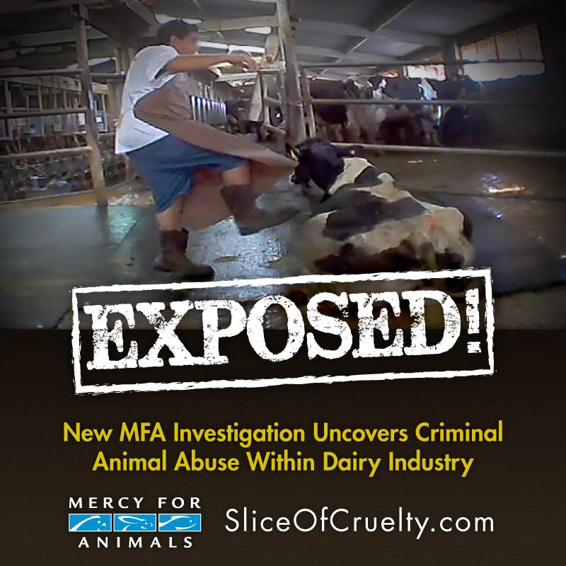 RT @MercyForAnimals: Don't miss your opportunity to speak out for abused dairy cows. Sign our online petition now. http://t.co/OAhdJeEpev h…