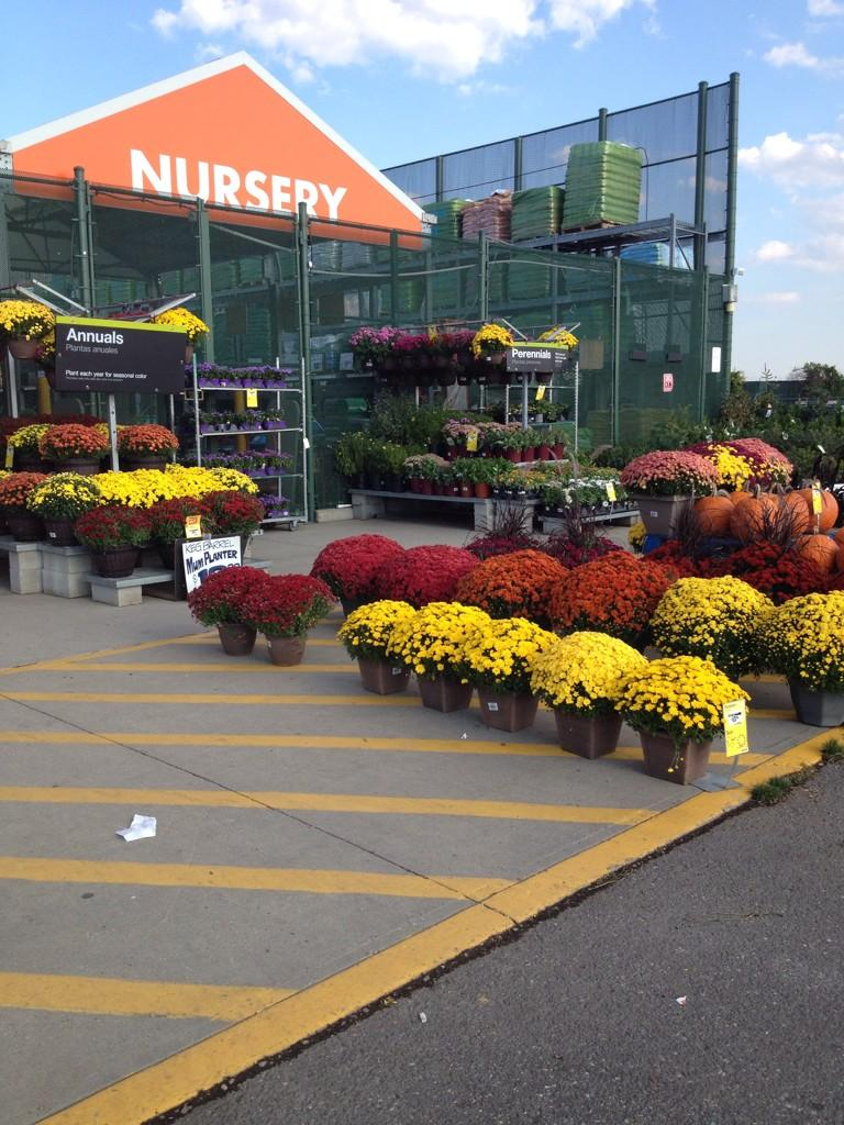 Steve Williams On Twitter Mums Farmingdale Ny Home Depot Fall Is For Planting Http T Co 4m9n7wdzfl