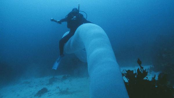 Pyrosomes are the Borg of the Oceans http://t.co/IVSzy8AuKU by @astVintageSpace http://t.co/vI4vImbGh0