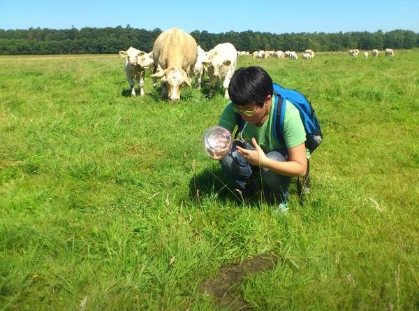 #IAmANaturalist because I look at dung piles whenever I find them just to see the insects on them (sepsids priority) http://t.co/vAfMQPdeGP