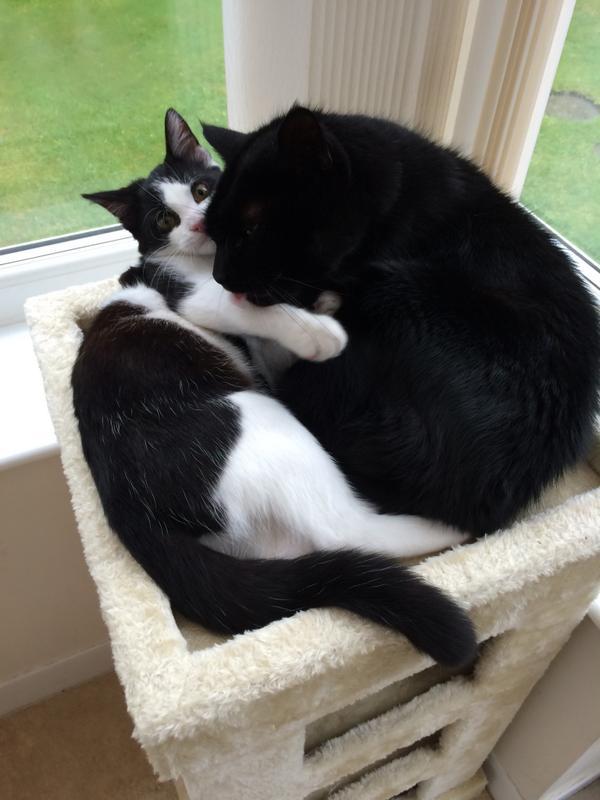 The boys are cuddling up #miloandlukah @RSPCAFelledge @LilyThePurr @missy_molly_mol ❤️ http://t.co/x7OrjRlNuK