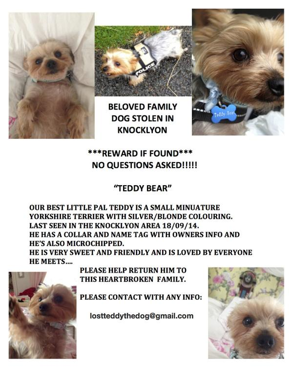 IRISH FRIENDS! Please,please retweet! Our tiny dog Teddy has been stolen from our family home! Plz spread the word! x http://t.co/z3r5MFqC2P