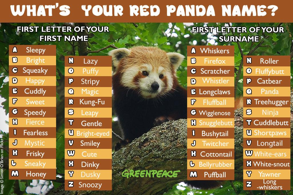 "Greenpeace UK On Twitter: ""It's #InternationalRedPandaDay"