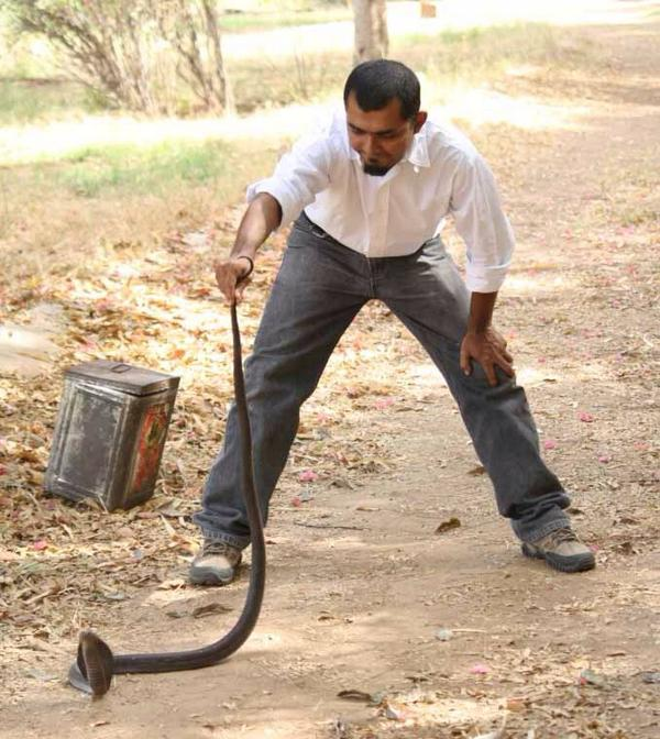 #IAmANaturalist cos snakes find it hard to cross highways cutting through the forests http://t.co/PXLpDiu4C3